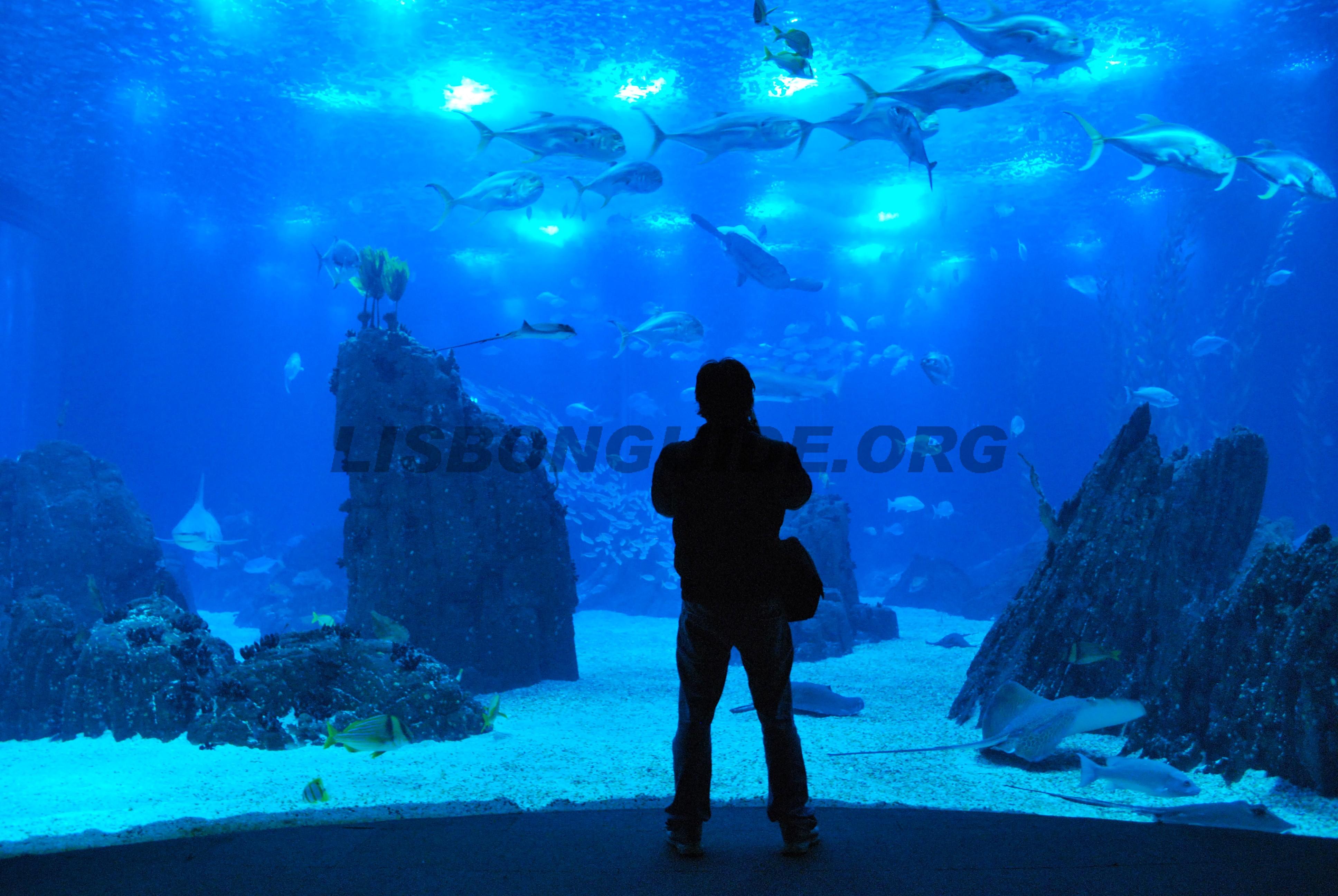 Lisbon_Oceanarium_Aquarium