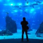 Lisbon Oceanarium – Aquarium