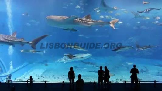 oceanarium_lisbon