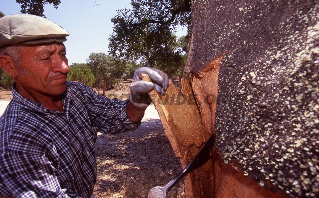 Cork-Harvesting-Portugal