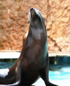 Sea_Lion_Zoo_Lisbon